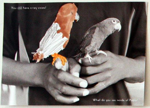 cmca-animal-workshop-fotoplay-bronstein