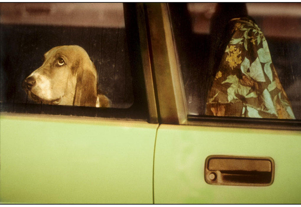 bronstein_dogs_cars_handpainted_book-4