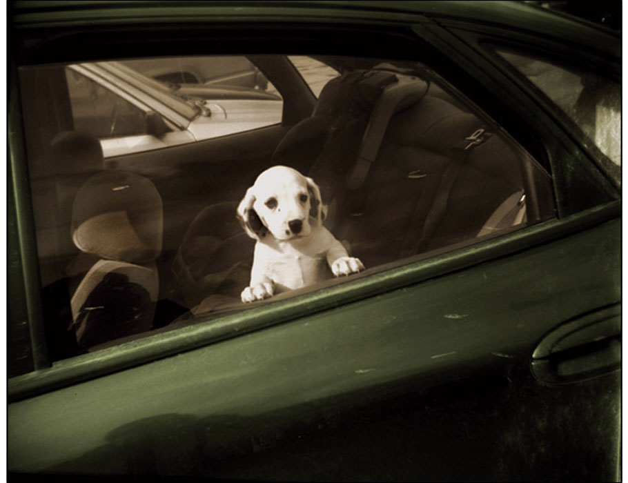 bronstein_dogs_cars_handpainted_book-5