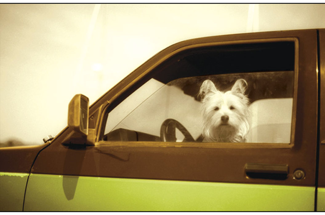 bronstein_dogs_cars_handpainted_book-6