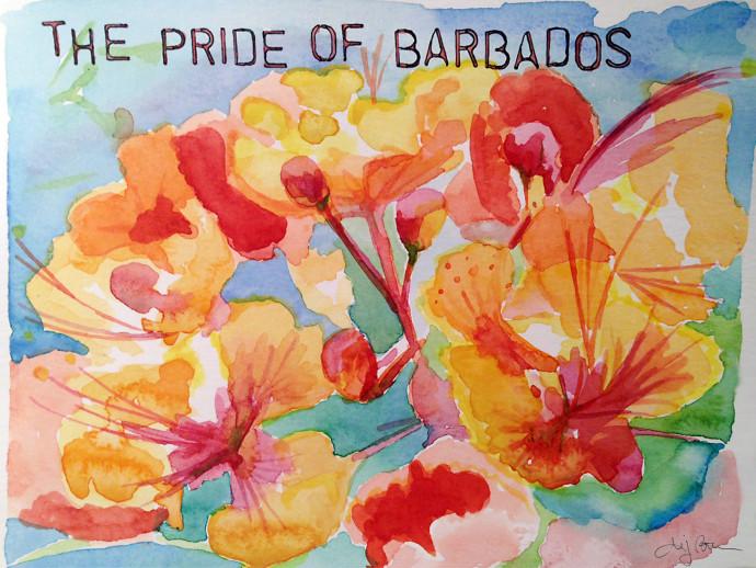 Pride_Of_Barbados_MJBronstein_watercolor