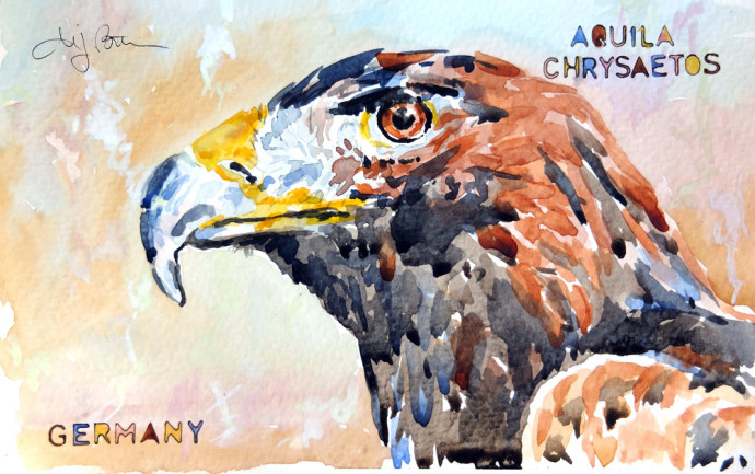 aquila-chyrsaetos-m.j.bronstein-watercolor