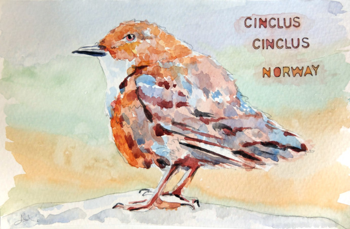cinclus-cinclus-m.j.bronstein-watercolor