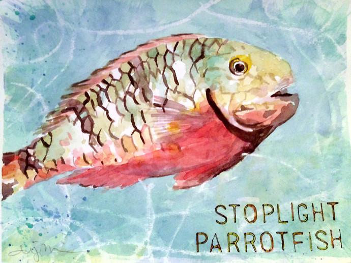 Stoplight-Parrotfish-M.J.Bronstein-watercolor
