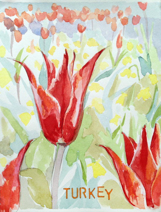 turkey-tulip-bronstein-watercolor