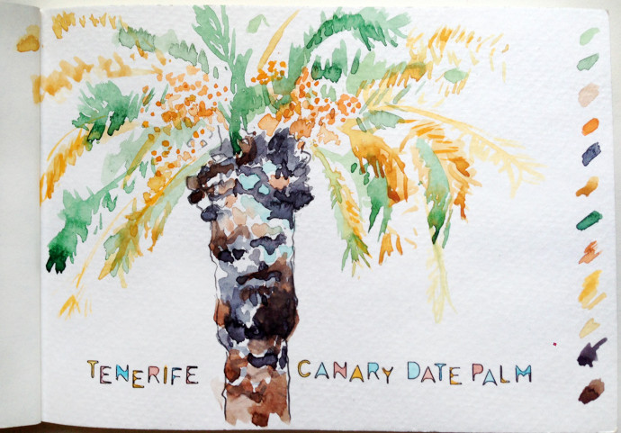 canary-date-palm-marcie-bronstein