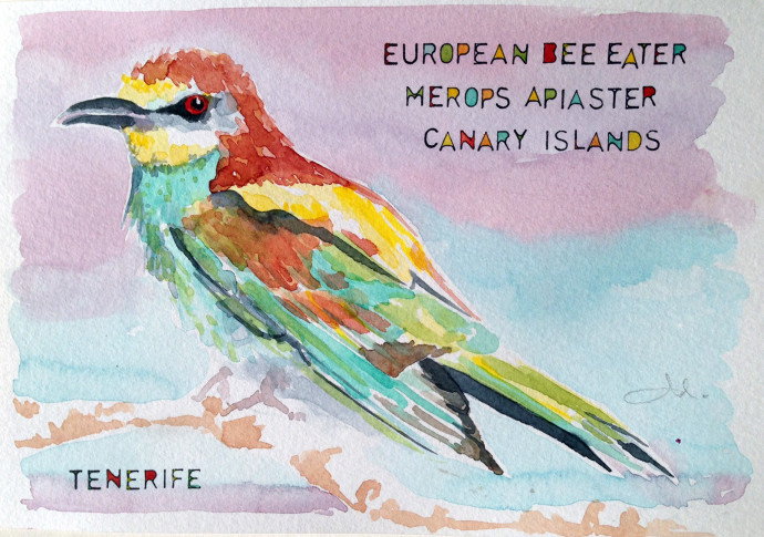 European_Bee_Eater_Tenerife-Bronstein-watercolor