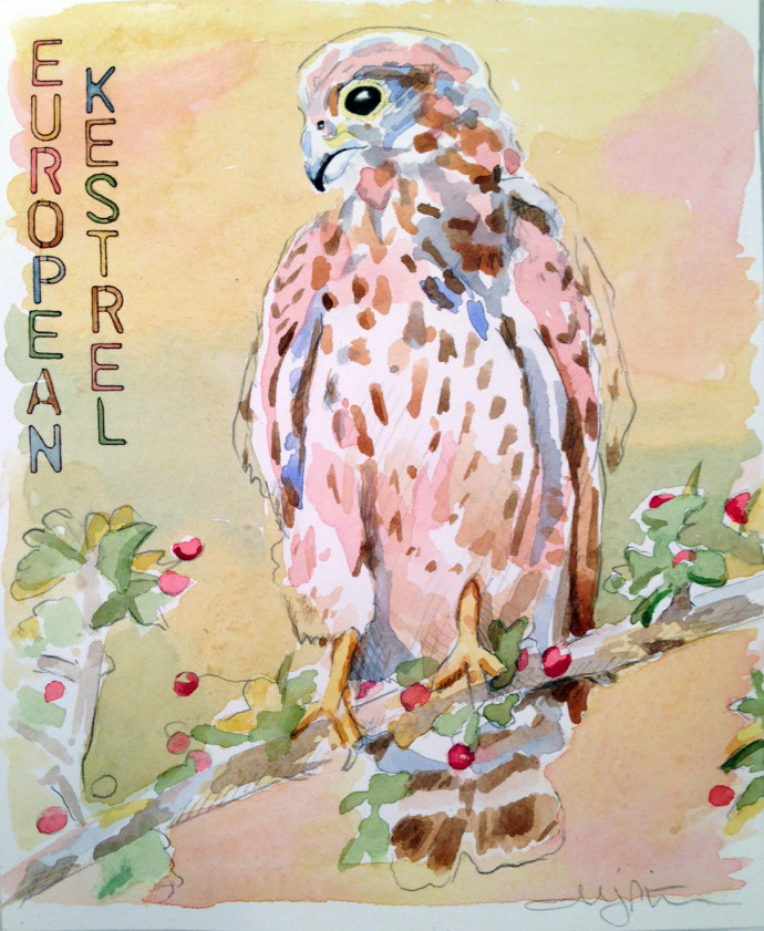 Marcie-Bronstein-watercolor-European-Kestrel