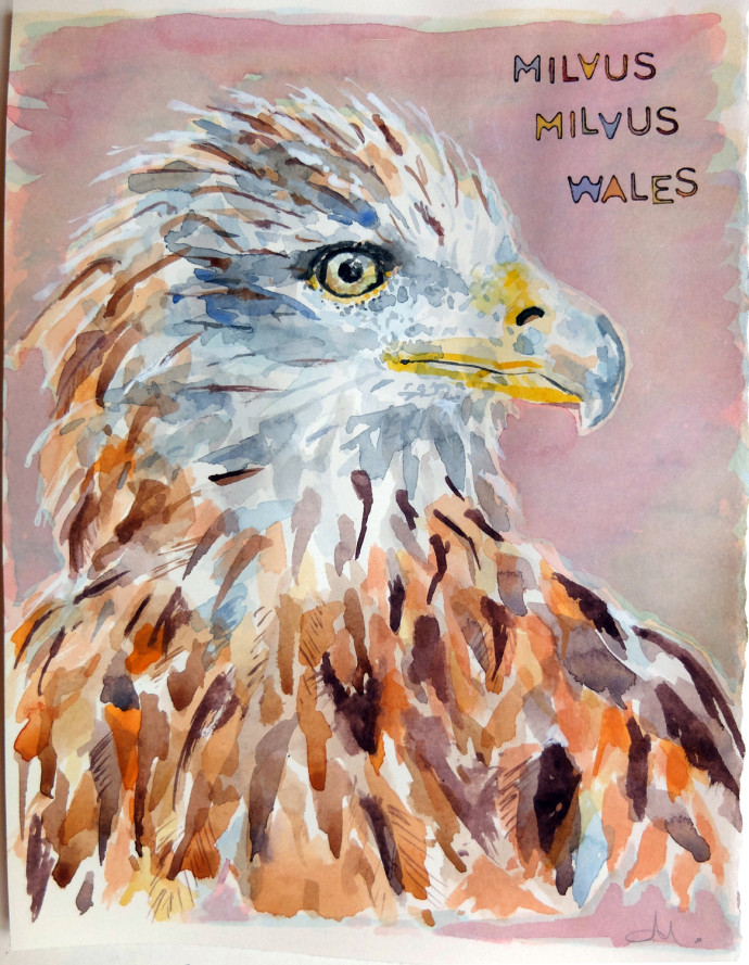 Milvus_Milvus_M.J.Bronstein-watercolor