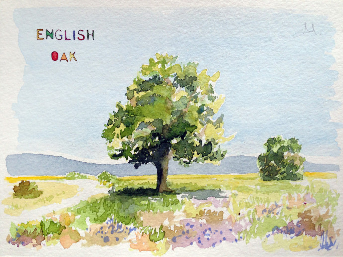 english-oak-bronstein-watercolor