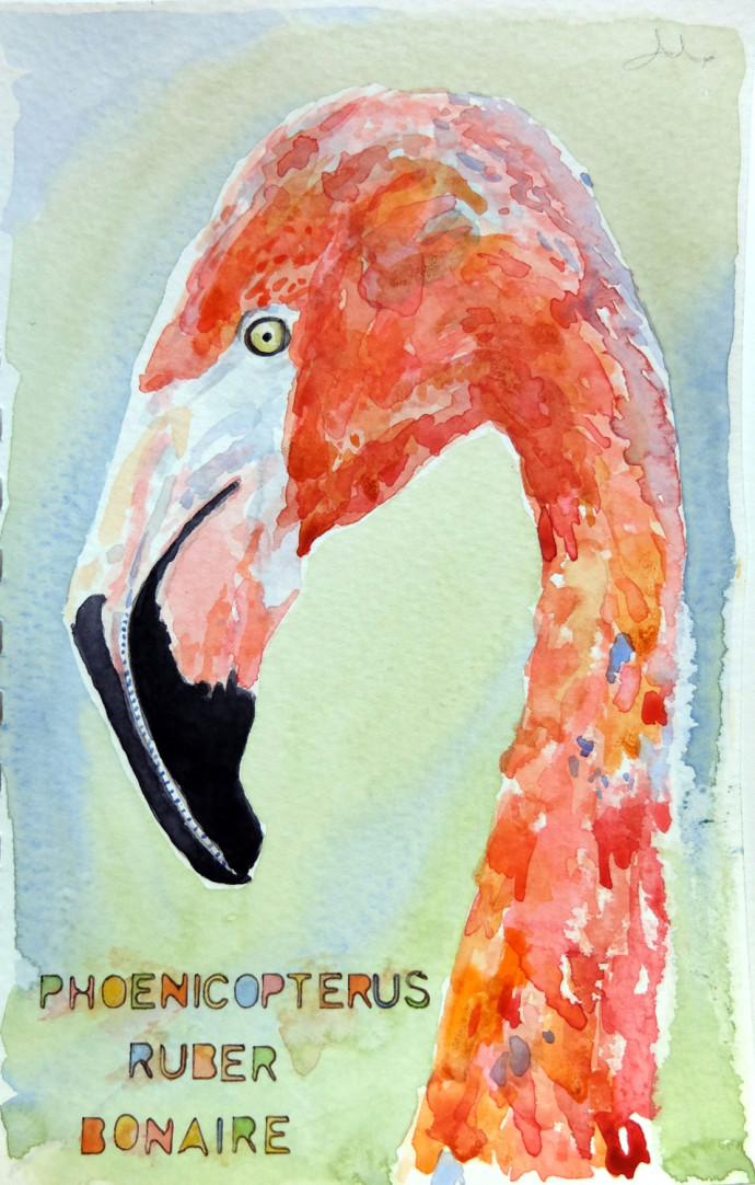 phoenicopterus-rubela-m.j.bronstein-watercolor