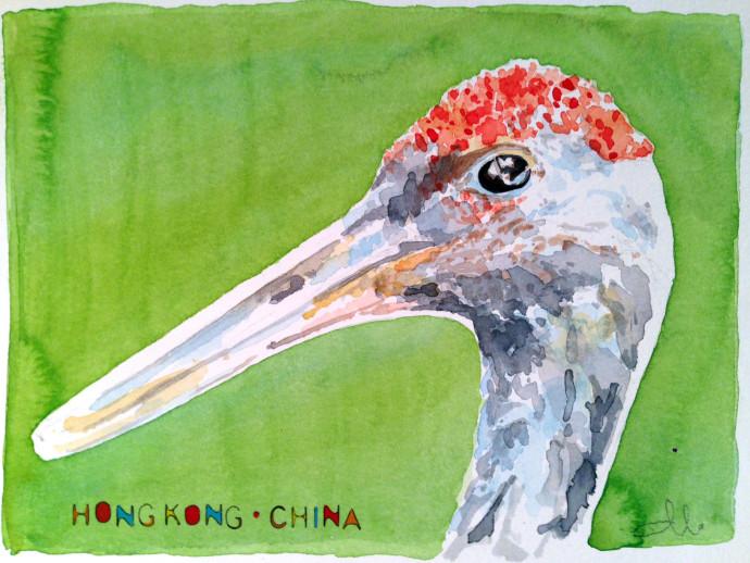red-crowned-crane-mattinablue